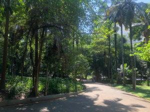 Imagem do Parque Buenos Aires em Higienópolis