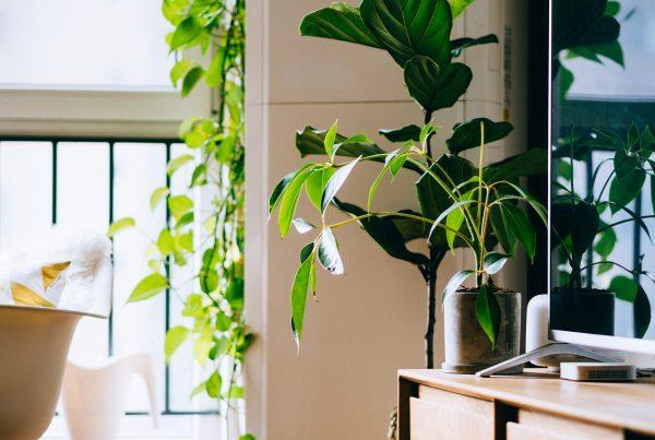 urban jungle - imagem de sala com varanda cheias de plantas