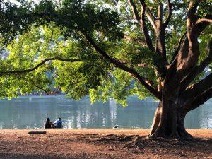 motivos para morar na vila nova conceição: Parque Ibirapuera