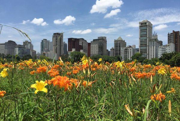 parque do povo - imagem do parque cheio de flores, em dia ensolarado